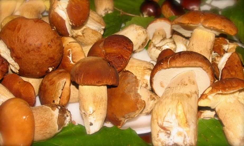 funghi della valtolla