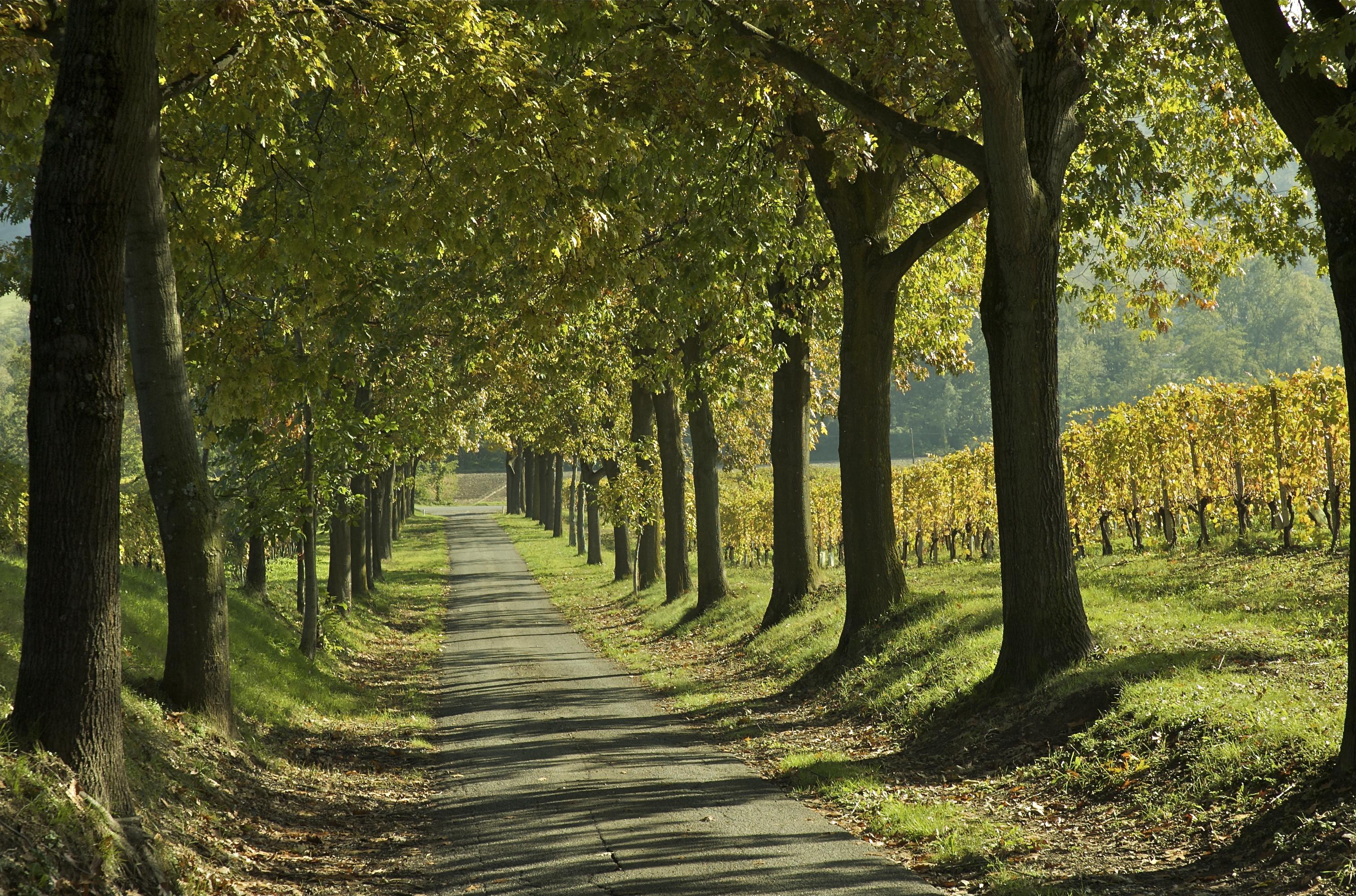 Valtolla il paesaggio agrario e le frane 5 conclusioni for Semplici paesaggi
