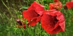 banner valdarda 2012 2 IMG_1671 _Snapseed copia