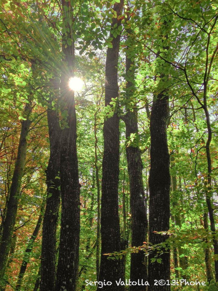 il grande bosco della valtolla...
