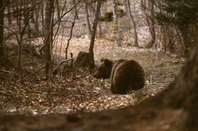 """l'orso da """"il fatto quotidiano"""""""