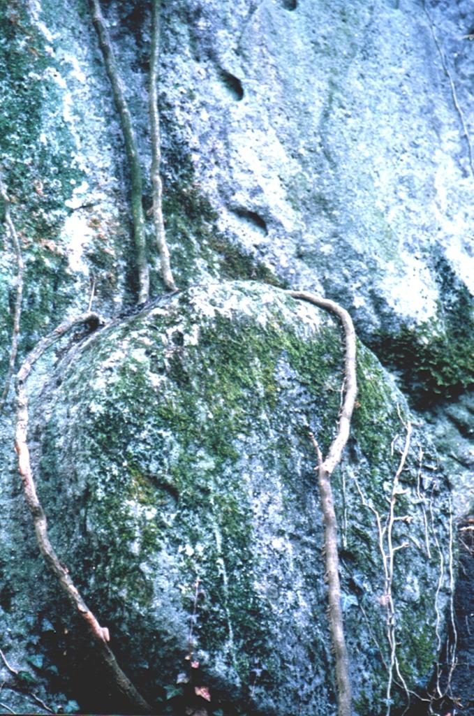 pietra delle mole-particolare