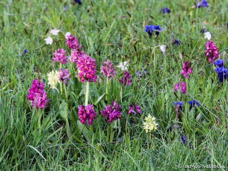 2014-05-08 fiori in valtolla LR-0263