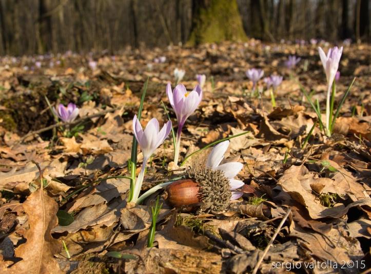 2015-02-19- crochi al boscone LR -2286
