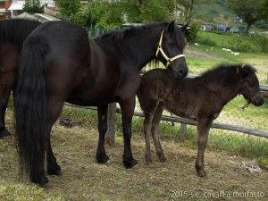 2015-05-03-cavalli a morfasso LR-3295