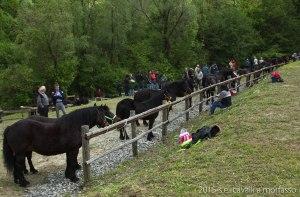 2015-05-03-cavalli a morfasso LR-3324