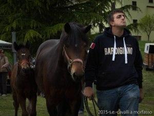 2015-05-03-cavalli a morfasso LR-3327