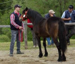 2015-05-03-cavalli a morfasso LR-3392