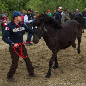2015-05-03-cavalli a morfasso LR-3402
