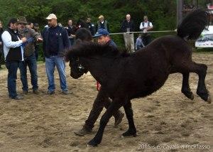 2015-05-03-cavalli a morfasso LR-3409
