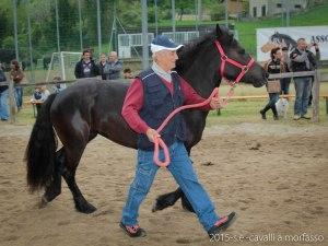 2015-05-03-cavalli a morfasso LR-3453