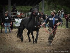 2015-05-03-cavalli a morfasso LR-3467