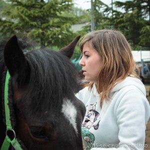 2015-05-03-cavalli a morfasso LR-3518