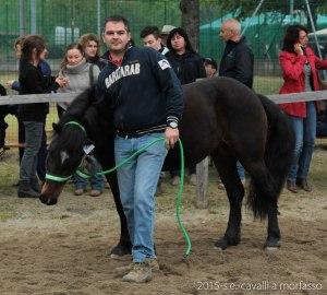 2015-05-03-cavalli a morfasso LR-3529