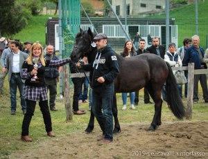 2015-05-03-cavalli a morfasso LR-3546