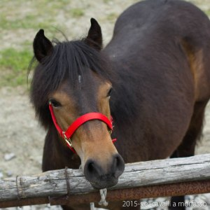 2015-05-03-cavalli a morfasso LR-7835
