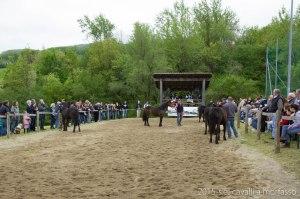 2015-05-03-cavalli a morfasso LR-7855