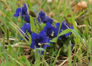 2015-05-05-fiori a santa franca LR-3557