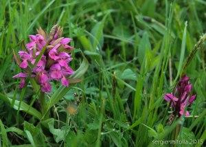 2015-05-05-fiori a santa franca LR-3566