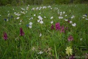 2015-05-05-fiori a santa franca LR-7904