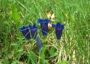 2015-05-05-fiori a santa franca LR-7910