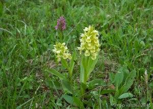 2015-05-05-fiori a santa franca LR-7912