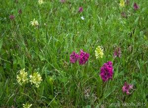2015-05-05-fiori a santa franca LR-7913