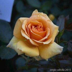 2015-05-10-paderna frutti antichi LR-3677