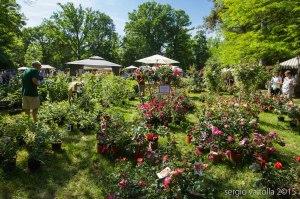 2015-05-10-paderna frutti antichi LR-8060