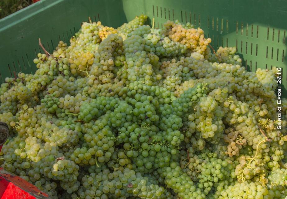 Il vino di Castell'Arquato, di Carpaneto P.noe…