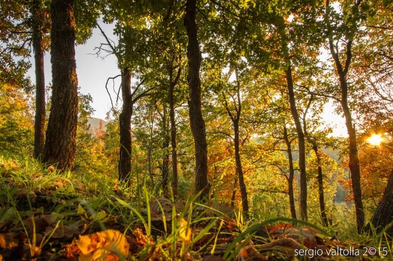 2015-10-31-autunno-in-valtolla-9219