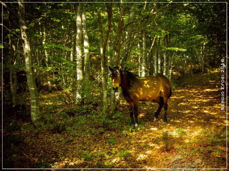 Terre dell'Ongina(1): il salto delcavallo