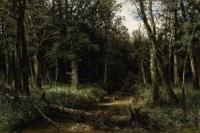 selva-oscura